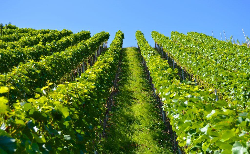 Voyages d'études pour les producteurs de vin, délégation, visite de vignobles pour les importateurs