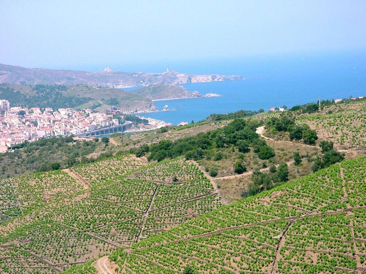 Read more about the article Master Classes Vins du Roussillon – Shanghai 14 Août